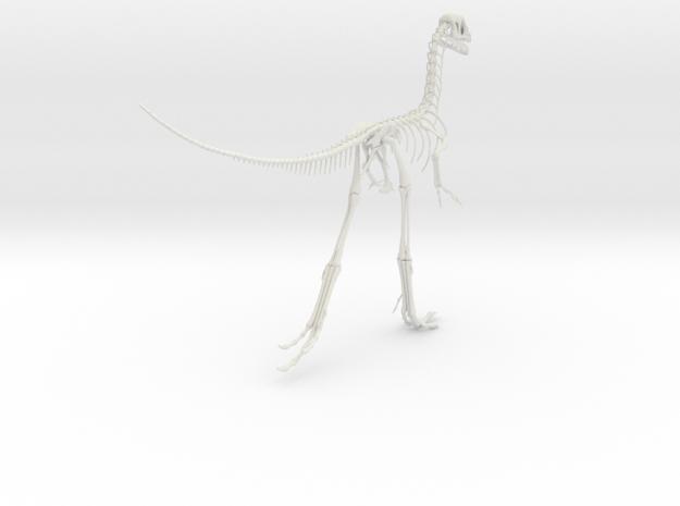 Compsognathus Skeleton (over 2-feet long)  in White Natural Versatile Plastic