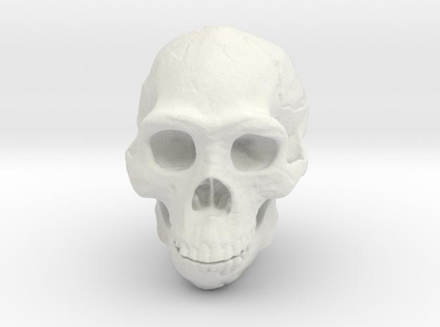 Real Skull : Homo erectus (Scale 1/1) in White Natural Versatile Plastic