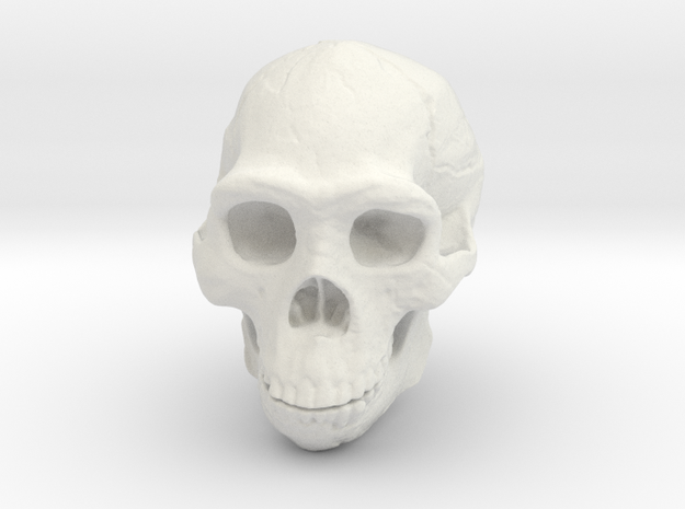 Real Skull : Homo erectus (Scale 1/2) in White Natural Versatile Plastic