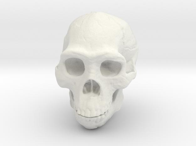 Real Skull : Homo erectus (Scale 1/4) in White Natural Versatile Plastic