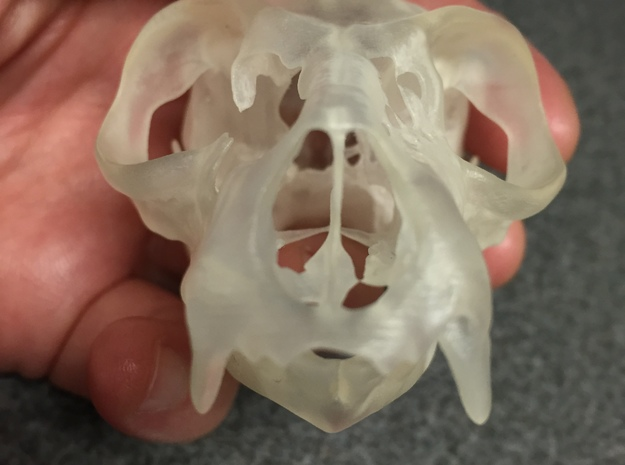 Lemur Skull in Smooth Fine Detail Plastic