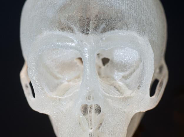 Spider Monkey Skull 75mm 3d printed Detailed plastic print