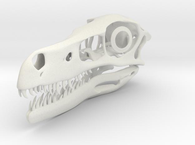 1:1 Velociraptor mongoliensis Skull and Jaw