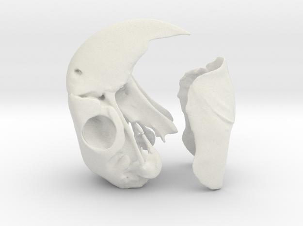 Macaw Skull in White Natural Versatile Plastic