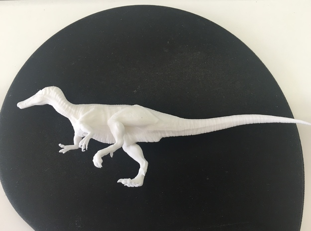 Baryonyx (Medium / Large size) in White Natural Versatile Plastic: Medium
