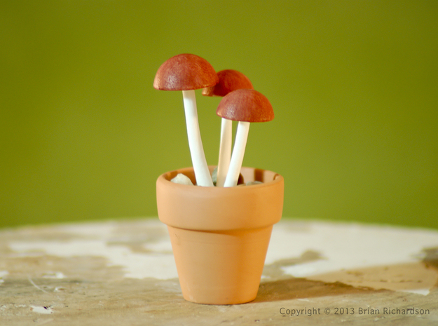 Shrooms To Be Potted in White Processed Versatile Plastic