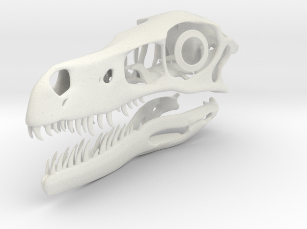 1:2 Velociraptor mongoliensis Skull and Jaw in White Strong & Flexible