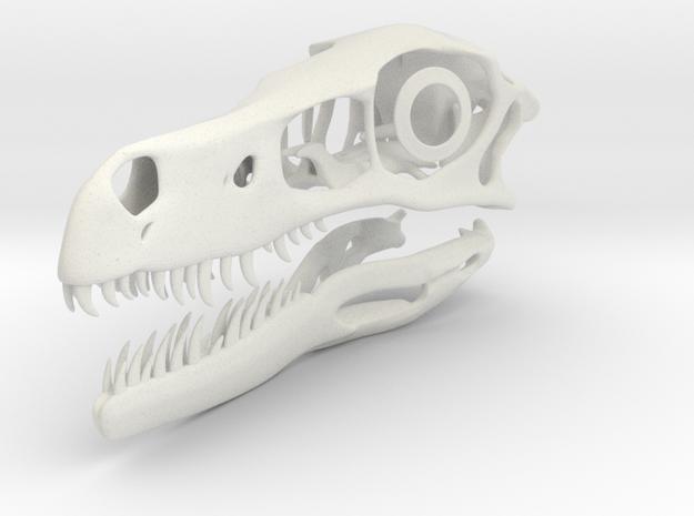 1:2 Velociraptor mongoliensis Skull and Jaw