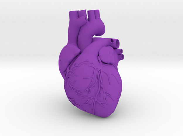 Heart Anatomical 90mm (scale is 1:1)