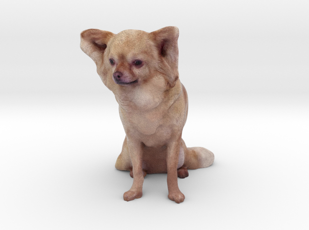 Brown Long Haired Chihuahua 001 in Full Color Sandstone