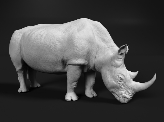 White Rhinoceros 1:48 Grazing Female