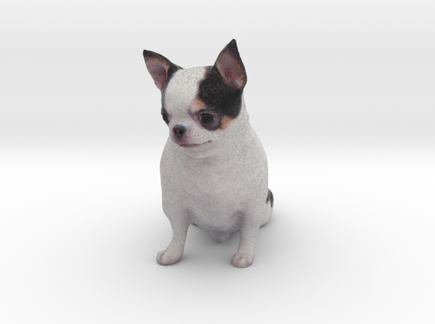 Scanned Chihuahua Dog -887 in Full Color Sandstone