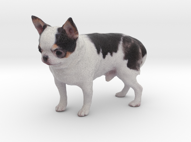 Scanned Chihuahua Dog -889 in Full Color Sandstone