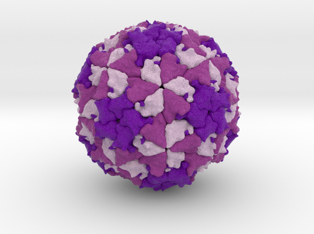 Theiler's Encephalomyelitis Virus  in Full Color Sandstone