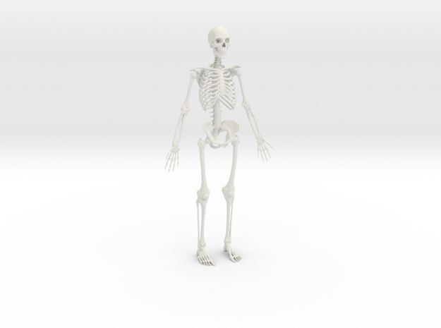 Human Skeleton -1:6 scale (30 cm) in White Natural Versatile Plastic