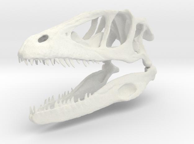 Dinosaur skull in White Natural Versatile Plastic