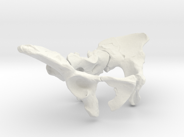 AL288-1 pelvis reconstruction (1/2 size).  in White Natural Versatile Plastic
