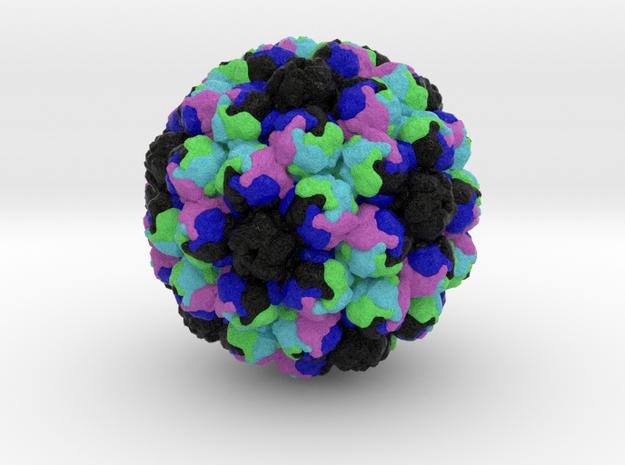 Avian Polyomavirus in Full Color Sandstone