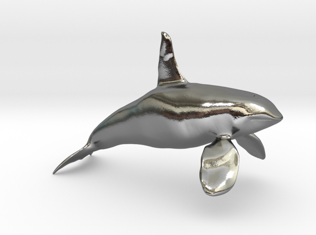 Orca-male-solid in Polished Silver: 28mm