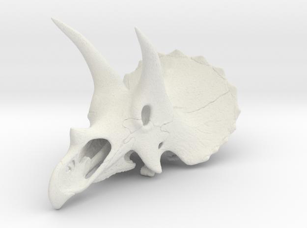 Triceratops skull - dinosaur model