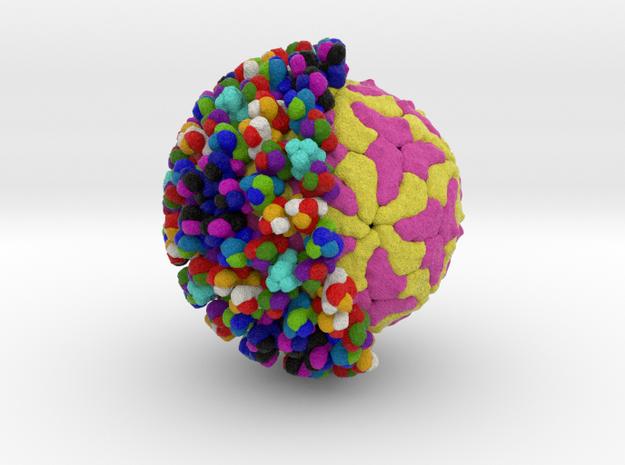 Bluetongue Virus in Natural Full Color Sandstone