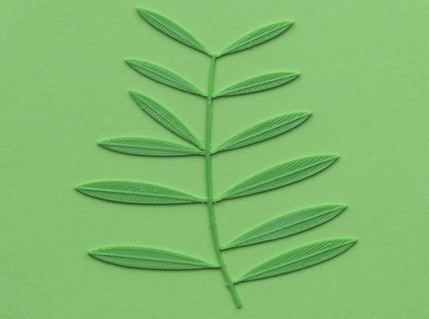 Olive tree branch in Green Processed Versatile Plastic: Extra Small