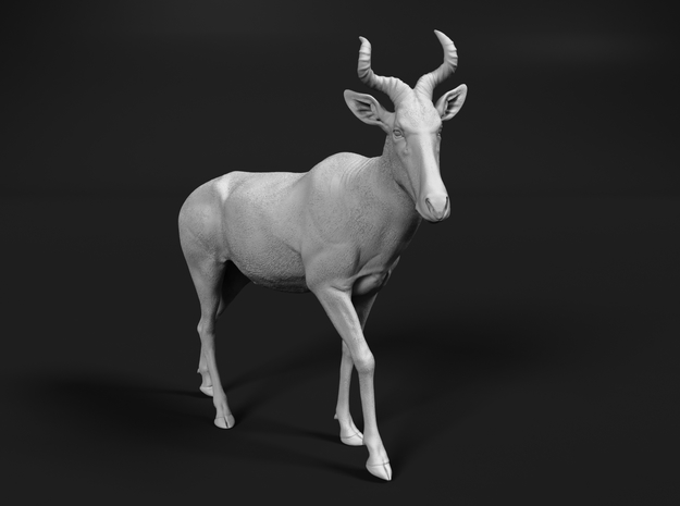 Coke's Hartebeest 1:25 Walking Male in White Natural Versatile Plastic