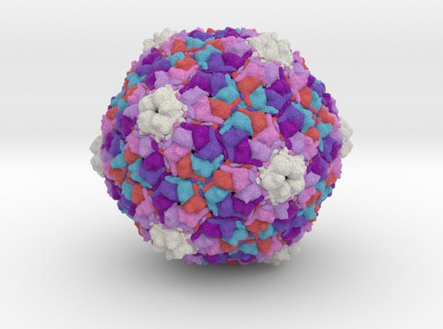 Bacteriophage SPP1 in Natural Full Color Sandstone
