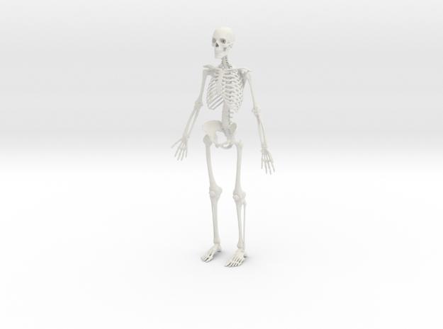 Human Skeleton -1:6 scale (30 cm) in White Natural Versatile Plastic