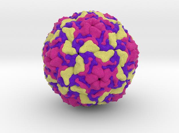 Infectious Enterovirus-E in Natural Full Color Sandstone