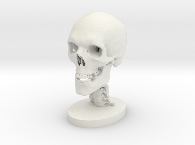 1/4 Scale Human Skull in White Natural Versatile Plastic