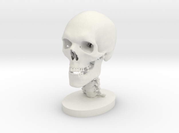 3/4 Scale Human Skull in White Natural Versatile Plastic
