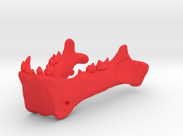 Homotherium skull, mandible 3d printed