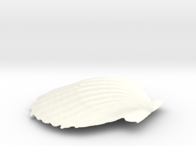 Scallop Shell in White Strong & Flexible Polished