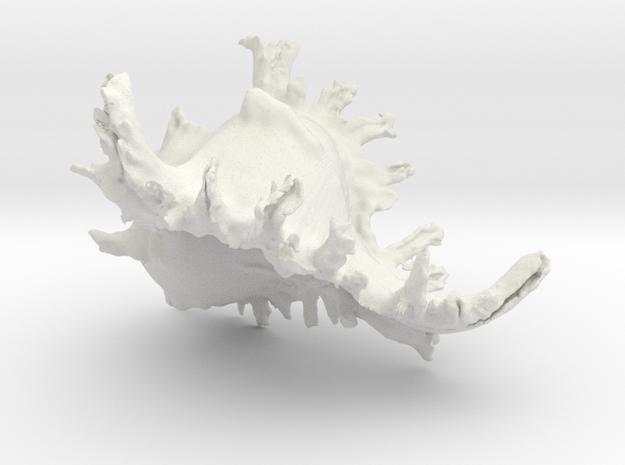 SeaShell in White Strong & Flexible