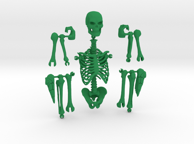 Articulated Skeleton