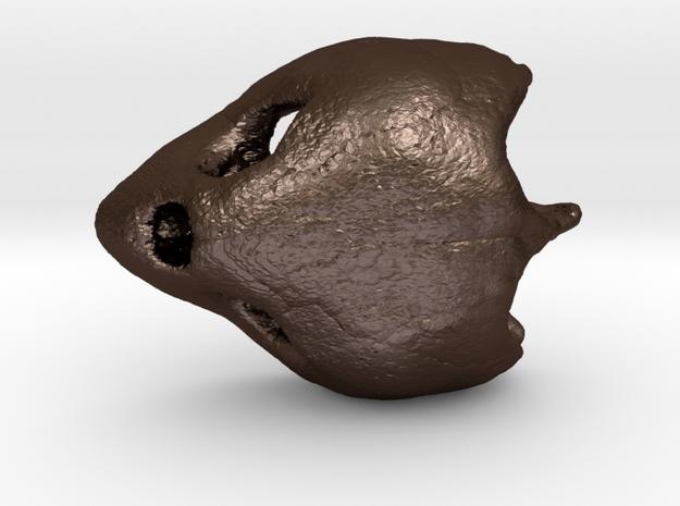 Loggerhead Sea Turtle Skull 3d printed