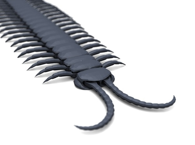 Articulated Centipede (Scolopendra sp.) 3d printed