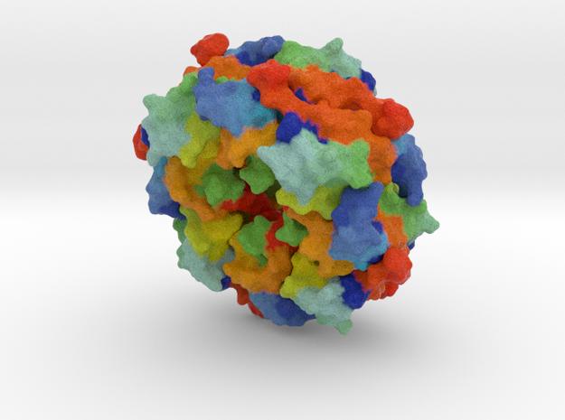 Ebola virus matrix protein