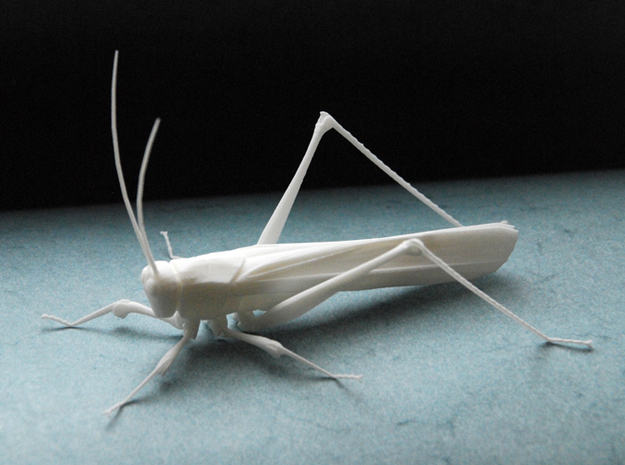 Articulated Katydid