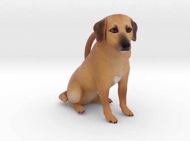 Custom Dog Ornament - Peanut