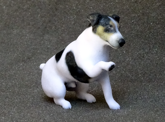Begging Jack Russell Terrier in Full Color Sandstone