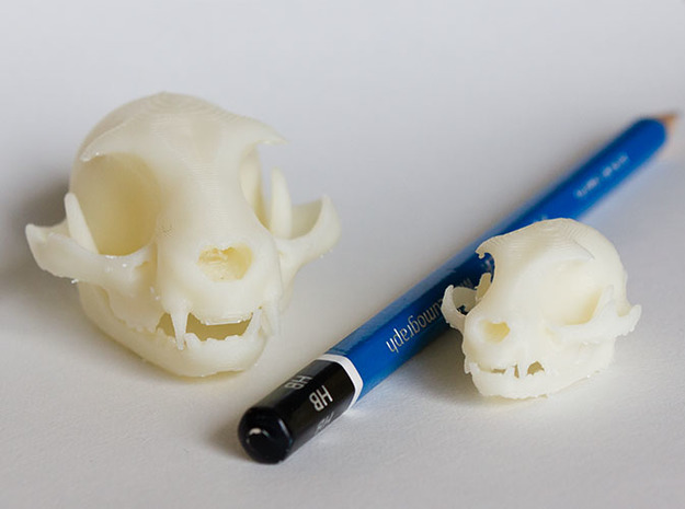 "Mini Cat skull ZBrush sculpture 3d printed Mini and Standard model with an HB pencil for scale. Printed on ""MakerBot: The Replicator"" at the local college. Shapeways prints should look even better since they use high resolution printers."