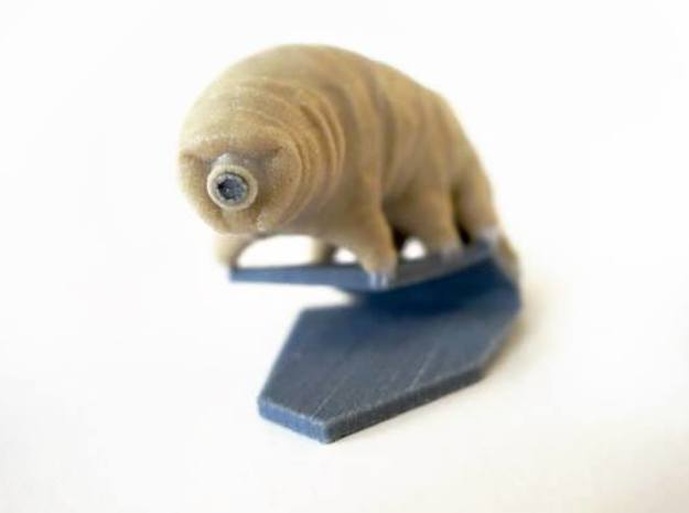 Tardigrade (Water Bear)