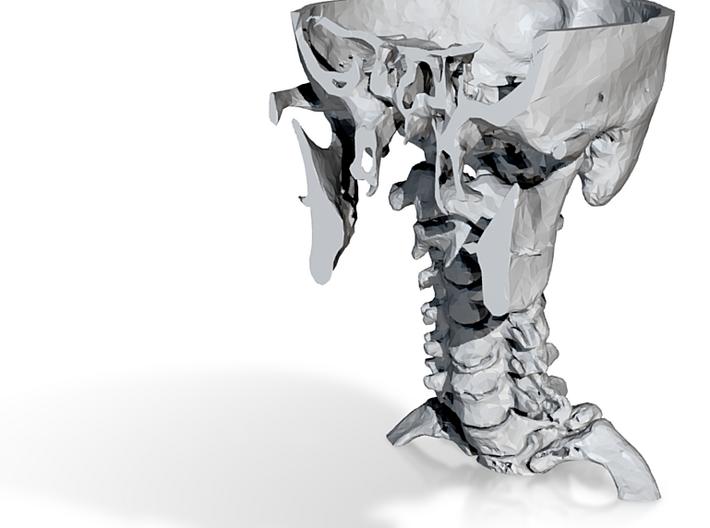 Cervical Spine (SKU 012) 3d printed