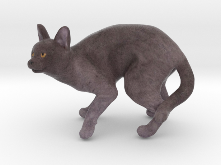 Fearing Gray Chartreux 3d printed