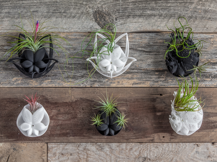 Bulbophyllum Gracilis Planter 3d printed More wall-hanging designs in this series