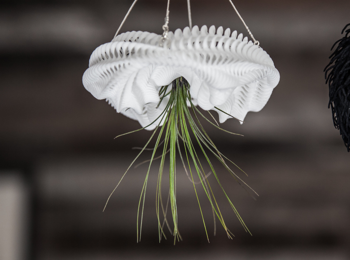 Bulbophyllum Ondulatus Planter 3d printed Tillandsia species: T. filifolia