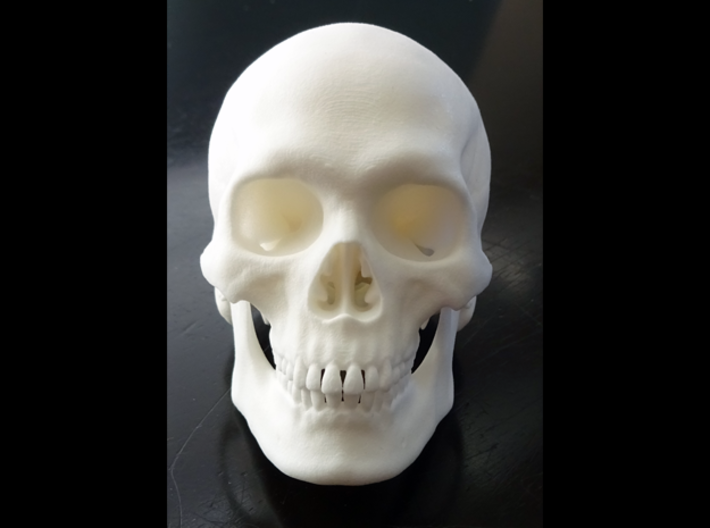 Realistic Human Skull With Removable Jaw V.2.00 3d printed
