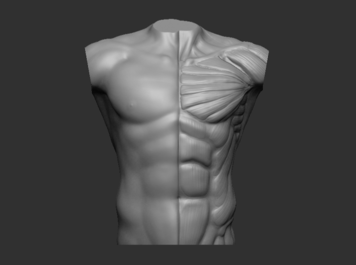 Male Bust Anatomy Reference 3d printed